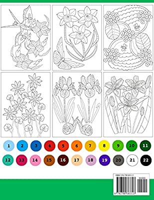 Colour By Numbers Large Print Colour By Number Butterflies Birds And Flowers Adult Colouring Book Lalgudi Sujatha Amazon Com Au Books