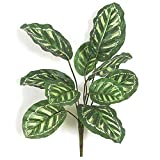"""SilksAreForever 22"""" UV-Resistant Outdoor Artificial Calathea Roseopicta Plant -Green/White (Pack of 12)"""