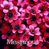 10pcs/bag Rare Leptospermum Scoparium Flower Seeds Amazing Garden Bonsai Plant Tree Flower Seeds home garden