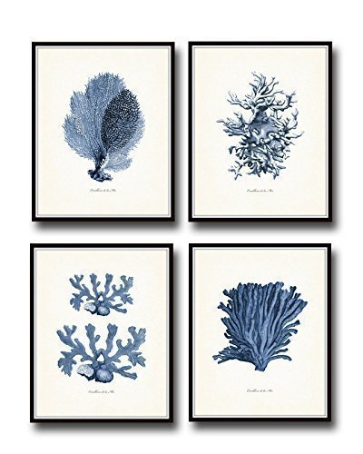 Best charming quaint and elegant shabby chic wall decor for Best brand of paint for kitchen cabinets with seashell prints wall art