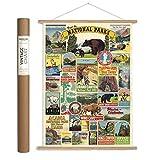 Cavallini Papers & Co., Inc. VPK/NP Caviling Vintage National Parks Hanging Poster Kit Vintage Wall Décor Multi