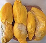 Thai Durian Malvaceae Durio zibethinus 10 Seeds Durian seeds Thailand