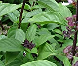 Thai Siam Queen Basil Seeds - 30+ Seeds