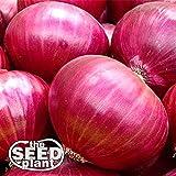 Red Creole Onion Seeds - 300 Seeds