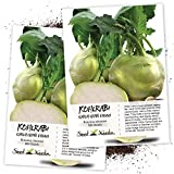 Seed Needs, Early White Vienna Kohlrabi (Brassica oleracea) Twin Pack of 500 Seeds Each Non-GMO