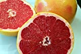 Grapefruit Seeds - RUBY RED - Citrus Fruit - Medical Benefits - 10 Seeds