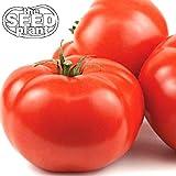 Beefsteak Tomato Seeds - 250 Seeds Non-GMO