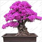 20 PCS Bougainvillea Bonsai Seeds F92 F93, Garden Flower Blooming (purple f92)