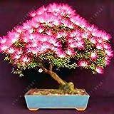 Zouvo Beautiful Albizia Julibrissin Bonsai Flower Acacia Seeds Bonsai Plant 20pcs/Pack