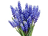 15 Grape Hyacinth - Muscari Armeniacum