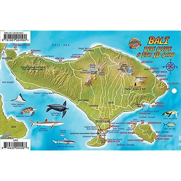 Bali Indonesia Dive Map Coral Reef Creatures Guide Franko Maps Laminated Fish Card Franko Maps Ltd 9781601904560 Amazon Com Books