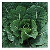 David's Garden Seeds Collards Georgia Southern SL1223 (Green) 200 Non-GMO, Heirloom Seeds