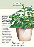 Stevia - 12 Seeds - Organic Heirloom Seed
