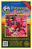 Everwilde Farms - 2000 Red Yarrow Wildflower Seeds - Gold Vault Jumbo Seed Packet