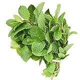 Fresh Mint Leaves (3 oz.)