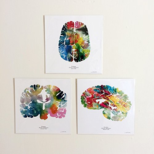 human brain art print set three 12 x 12 watercolor brain prints