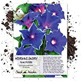 Seed Needs, Blue Picotee Morning Glory (Ipomoea nil) 70 Seeds Untreated