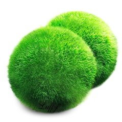 Luffy-Marimo-Moss-Balls--Beautiful-and-Natural-Aquarium-Decor--Absorb-harmful-chemical-in-water-Perfect-heirloom-Gift-Symbolize-eternal-love