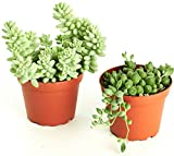 """Shop Succulents