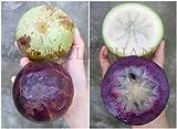 10 seeds mix Purple & Green Star Apple, Cainito Caimito Golden Leaf Tree RARE