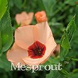 50 Seeds Linum Grandiflorum Seeds Bonsai Plant flower seeds 5 #32713240233ST