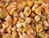 Earthcare Seeds Aunt Molly's Ground Cherry 50 Seeds Physalis pruinosa (Certified Organic By MOSA)