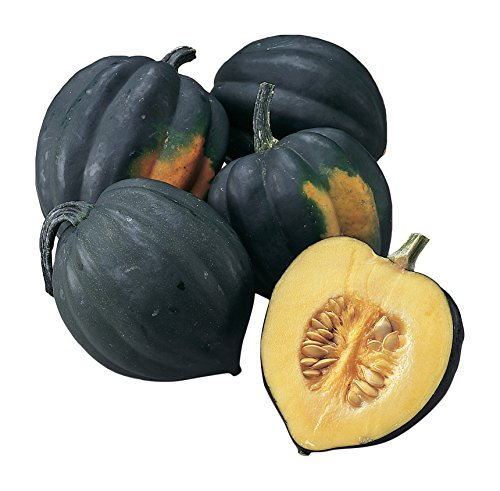 Burpee Acorn Table Queen Winter Squash Seeds 30 seeds