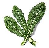 700 Lacinato Kale Seeds - Heirloom, Non-GMO