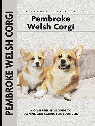 Pembroke Welsh Corgi Video: Missy! Pembroke Welsh Corgi Puppy - undocked tail! (For adoption)