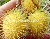 AGROBITS 50 Pcs Mixed Rambutan Bonsai, Malaysia Miracle Delicious Fruit Tree, Sweet Giant Plant Tree Plant for Home Garden Gift for Kids: 17