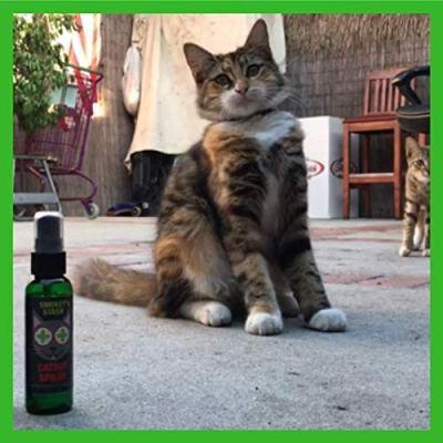 Catnip spray for cats, 51x9ort1AfL.jpg?resize=400%2C400&ssl=1