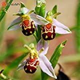New Arrival Bee Orchid Seeds Perennial Flowering Plants Potted Seeds Interesting Plants 50 Particles/lot