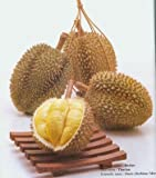 """SD0549 Durian Seeds, Malaysian """"King of Fruits"""" Seed, Rare & Hard-to-Find (1 Seed)"""