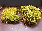 EZ Trading Super Assorted Mixed Mosses (Gallon)