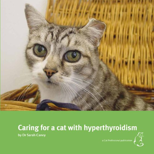 Caring for a Cat with Hyperthyroidism