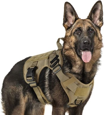 61 FCu %2Be5L. AC SL1000 Best Harness For Husky – A Throughout Buying Guide With Recommendations