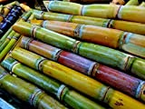 Tara-garden SUGAR CANE THAI AKHA HEIRLOOM SEED VERY JUICY & SWEET RARE TROPICAL
