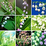 Hot Sale!6 Colors Mixed Bell Orchid Seeds Campanula Flowers Potted Flower Plants Convallaria Seed-100Seed/Lot,#RPBDBJ