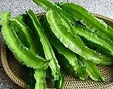 Winged bean, Goa bean, Princess bean -50 seeds