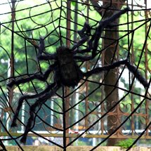 Black-Giant-Spider-MerryMore-50-inch-Large-Plush-Hairy-Spider-Halloween-Props-Indoor-Outdoor-Halloween-Decorations