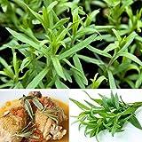 C&C Products 10pcs Tarragon Seed Artemisia dracunculus Seed