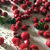 Woodland Wild Strawberry Seeds (Fragaria vesca) 100+ Rare Heirloom Seeds in FROZEN SEED CAPSULES for the Gardener & Rare Seeds Collector - Plant Seeds Now or Save Seeds for Years