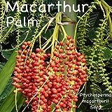 Plentree Seeds Package: ~MacArthur Palm~ Ptychoa Macarthurii Elegant Clumping Tree 30 Fresh Seeds