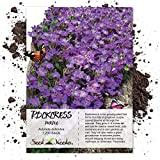 Seed Needs, Purple Rockcress Groundcover (Aubrieta deltoidea) 1,200 Seeds