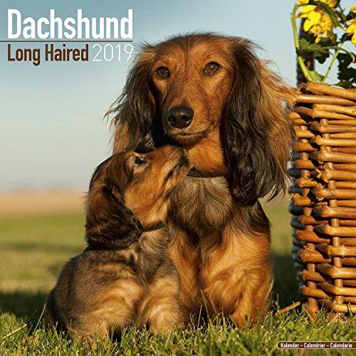 Longhaired Dachshund Calendar 2019 - Dog Breed Calendar - Wall Calendar