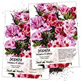 "Seed Needs, Godetia""Farewell to Spring"" (Clarkia Amoena) Twin Pack of 2,000 Seeds Each"