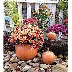 Decorative, Cast Stone Pumpkin Planter, Fall & Autumn Decor, Halloween Decoration