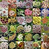 Seeds Shopp 200pcs/bag Hoya Seeds,potted Plants Bonsai Seeds,MIX flower Seeds For Sale Home Garden Farm
