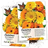 Seed Needs, Calendula Pacific Beauty Mix (Calendula officinalis) Twin Pack of 500 Seeds Each