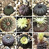 20pcs Genuine Mixed Cactus Seeds Frailea Asterioides Cactus Bonsai Succulent Seeds Home Garden Plant DIY
